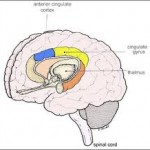 The Pain Stem in your Brain Stem
