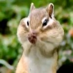beatbox-chipmunk