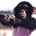 chimp-gun